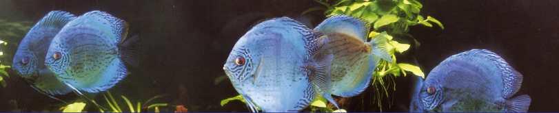 Poseidon aquakultur life for Lebendfutter zierfische